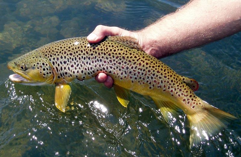Fly Fishing The Missouri River In Montana Montana Fly