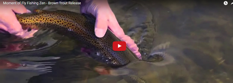 Monday Moment of Fly Fishing Zen - Brown Trout Release